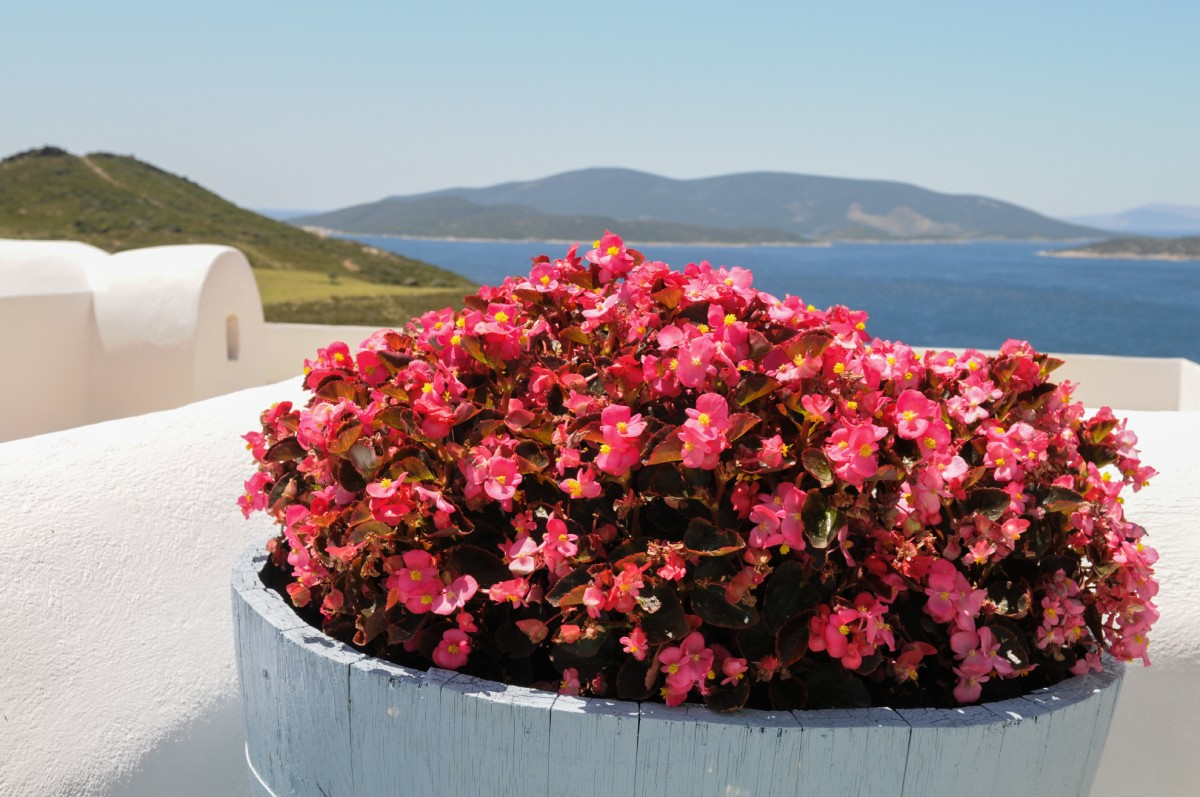 Hospitality in harmony with nature in Marmari, South Evia.